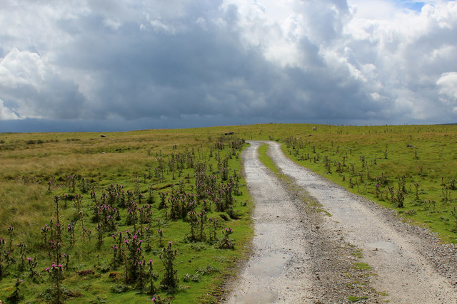 Bridleway on the Edge of Abbotside Common