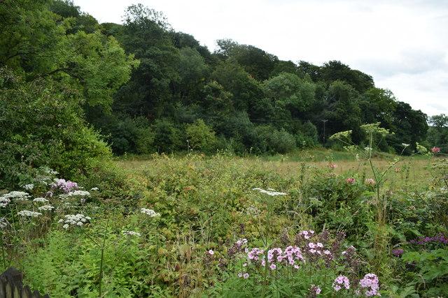 View of Kirk Wood