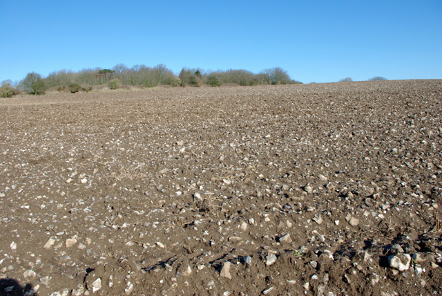 Clay with flints soil, South Downs