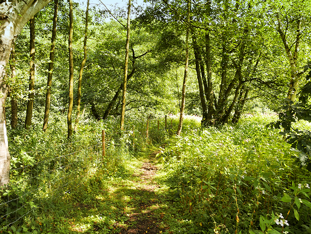 Path through Nature Reserve near Kingsley and Froghall Station