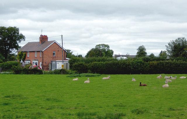 Pasture near Wrenbury Heath, Cheshire