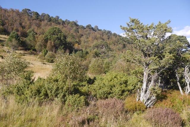 Woodland, Glen Feshie