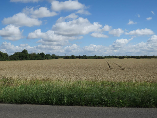 Field by Fulbourn Road