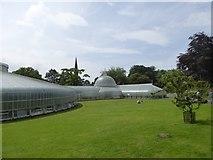 NS5667 : Kibble Palace by David Smith