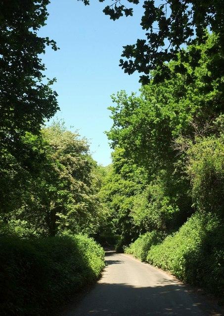 Lane to Brimley Farm
