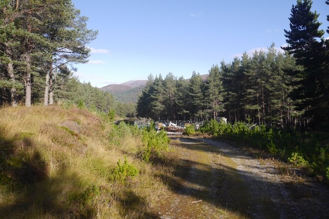 Forest and scaffolding, Glen Feshie