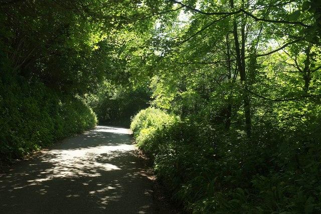 Lane to Stoke Abbott
