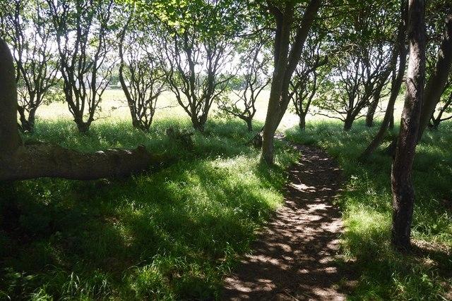 Path, Gullane