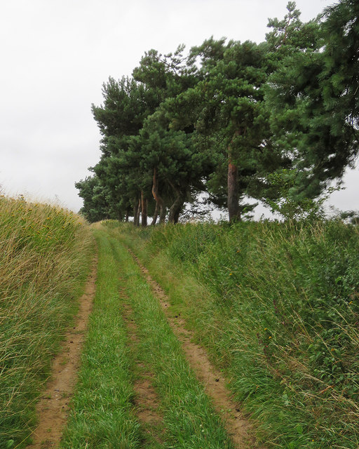 Bridle way to Waldringfield