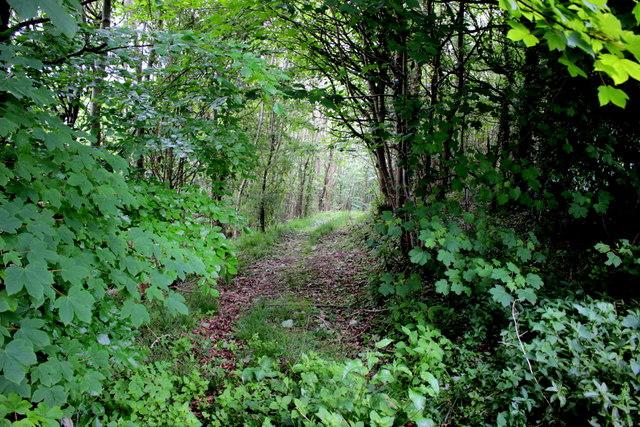Track into Arrock Plantation