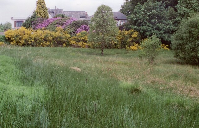 Wetland beside Milngavie Golf Club clubhouse