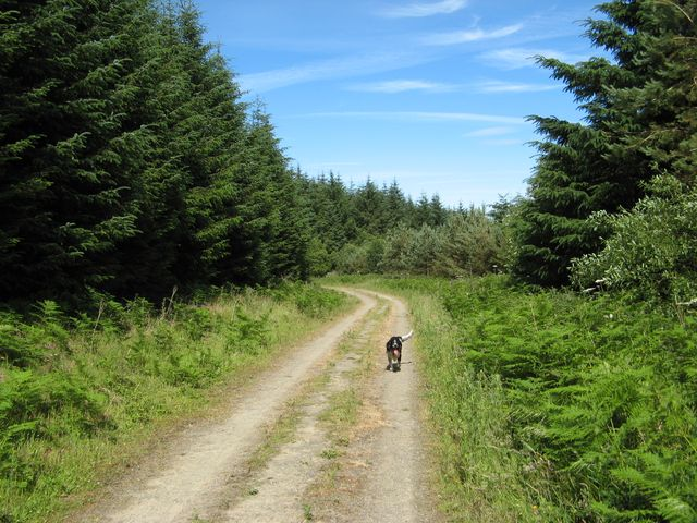 Track to Cwm