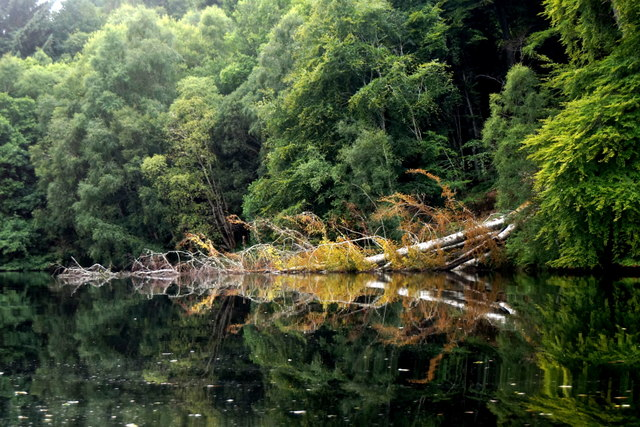 Fallen tree beside the River Beauly
