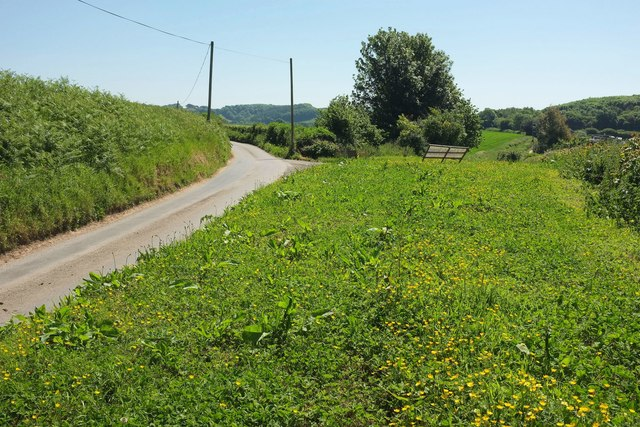 Roadside verge by Long Barrow Lane
