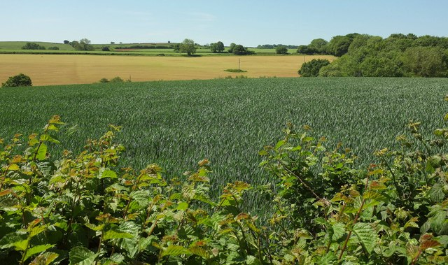 Farmland east of Stoke Abbott