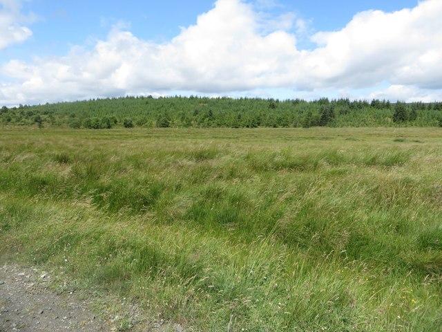 Grassland below Harry's Hill