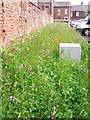 NY4055 : Wildflower border, Cumbria House car park by Rose and Trev Clough