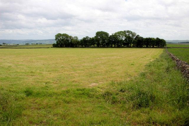 Strip of Woodland near Melbourne Farm
