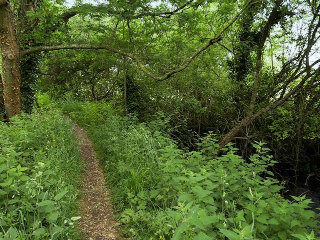 The Itchen Way near Bishopstoke