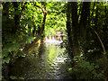 SU4619 : River Itchen Approaching Stoke Lock by David Dixon