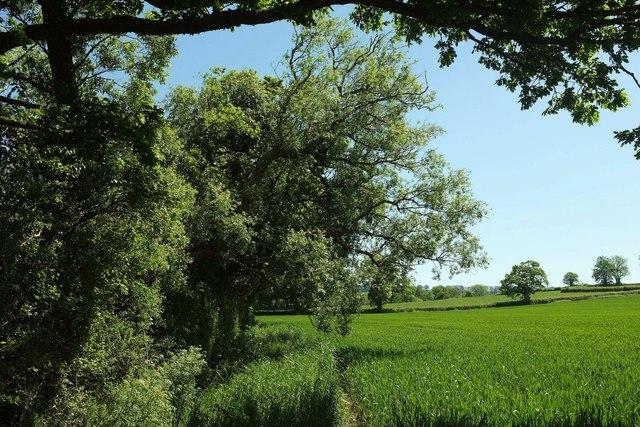 Field edge north of Sockety