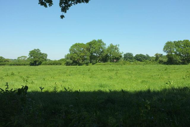 Field near Wood Dairy Farm