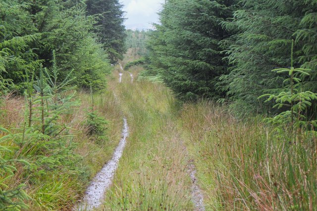 Track to Pernassie Hill, Bowhill