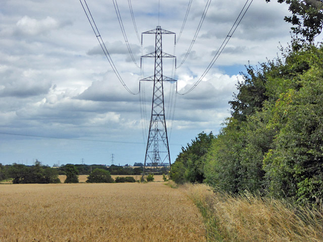 Power line over a barley field