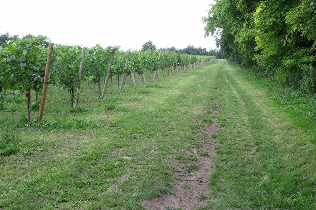 Vines at Chilford Hall