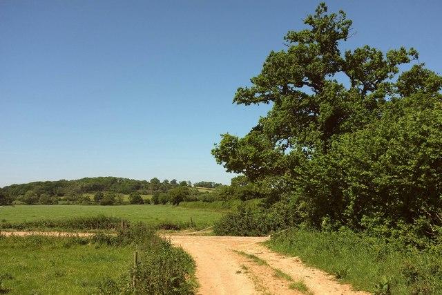 Path near Wood Dairy Farm