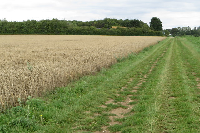 Jubilee plantation by farm track