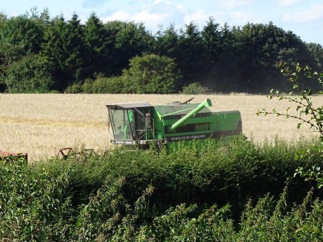 Harvesting at Cocks-hut-hill