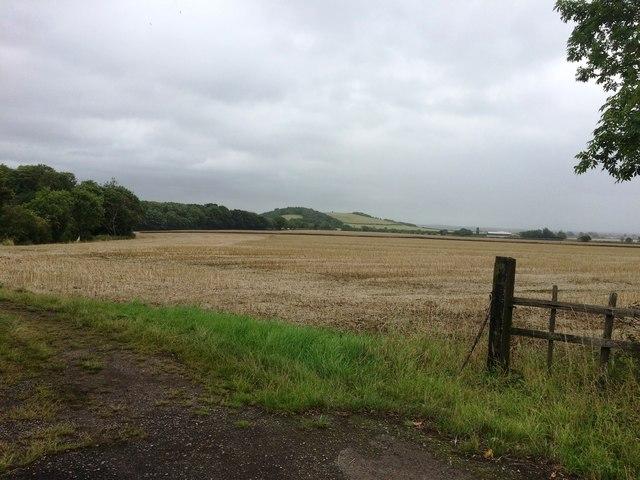 Farmland Adjoining Langold Holt
