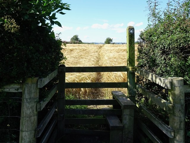 Stile and path through the crop on the Ecclesbourne Way