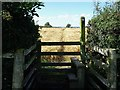 SK3045 : Stile and path through the crop on the Ecclesbourne Way by Ian Calderwood