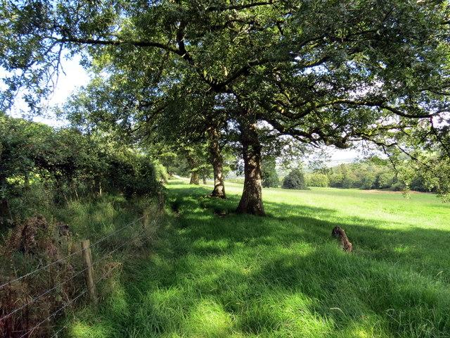 Llwybr dymunol / Pleasant path