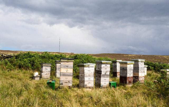 Bee hives on heather moorland