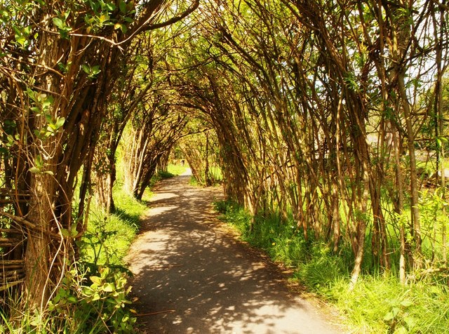 Willow Tunnel Wycollar