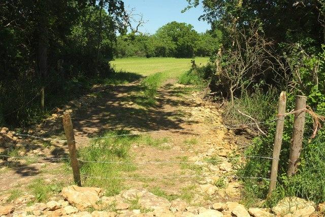 Track into field near Wood Dairy Farm