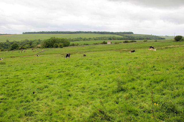 View Over Lathkill Dale