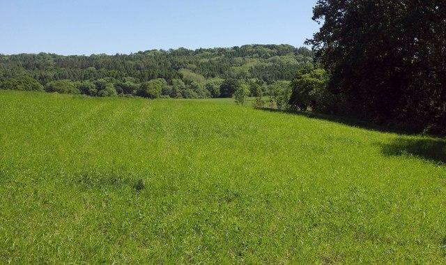 Field at north edge of Dorset