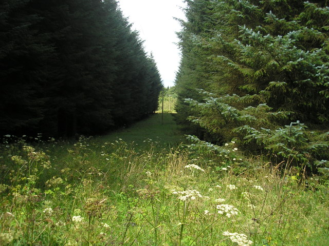 Gap in the forest