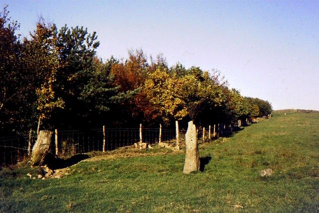 Dalton Park Wood