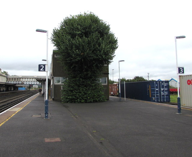 Tree on Eastleigh railway station