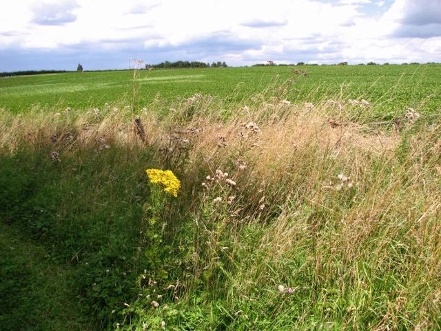 Crop fields beside the Boudica's Way