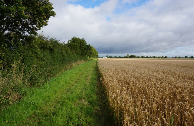 Path heading north from Featherbed Lane