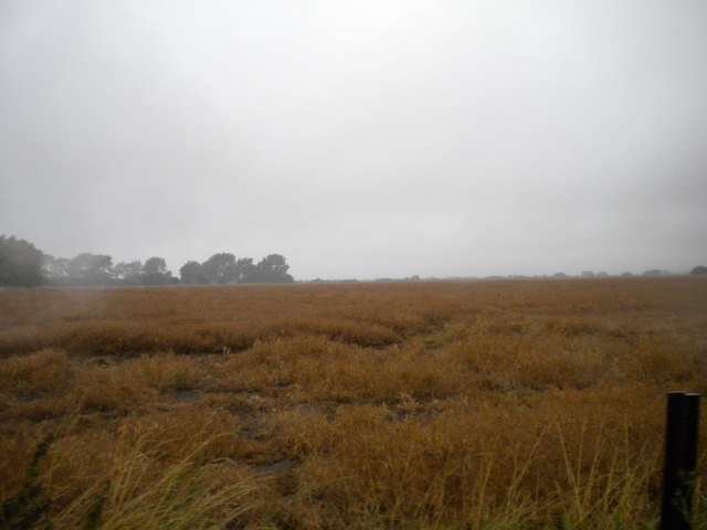 Field north of St Mary's Bay (1)