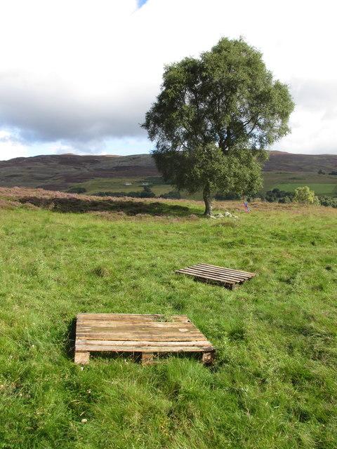 Lone tree in Glen Feardar