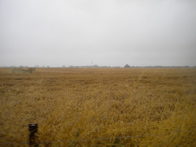 Field north of St Mary's Bay (3)