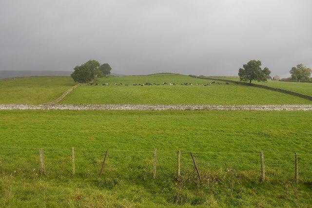Wensleydale field